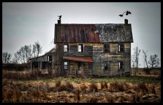 Vultures fight over roosting spots on the two chimneys of this old abandoned farmhouse along Old Wheatland Road in Western Loudoun near the village of Waterford. (Photo by Douglas Graham/WLP)