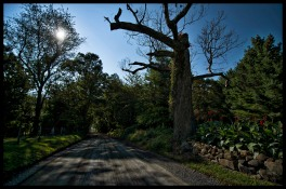 Northern Loudoun's historic gravel roads known as Richard Road outside of the Village of Lovettsville. (Photo by Douglas Graham/WLP)