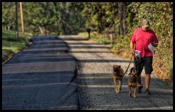 Bob Caines walks his dogs as he reads the morning newspaper along the half paved historic Williams Gap Road in Western Loudoun. Caines, who grew up in Loudoun and went to Broad Run High School says he walks the road daily but now its not going to be so safe, with the asphalt laid you can no longer hear traffic coming and that traffic is going to be moving twice as fast. Canes said, paving the road was unnecessary and not needed and worst of all makes the road unsafe for children to play, walk, ride a horse, or a bike. (Photo by Douglas Graham/WLP)