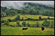 Storms clouds and fog rolling in along Williams Gap Road on the Blue Ridge Mountains in Western Loudoun. (Photo by Douglas Graham/WLP)