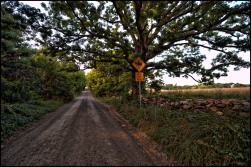 Western Loudoun's historic dirt road known as Yellowschool House Road outside of the Village of Bluemont. (Photo by Douglas Graham/ WLP)