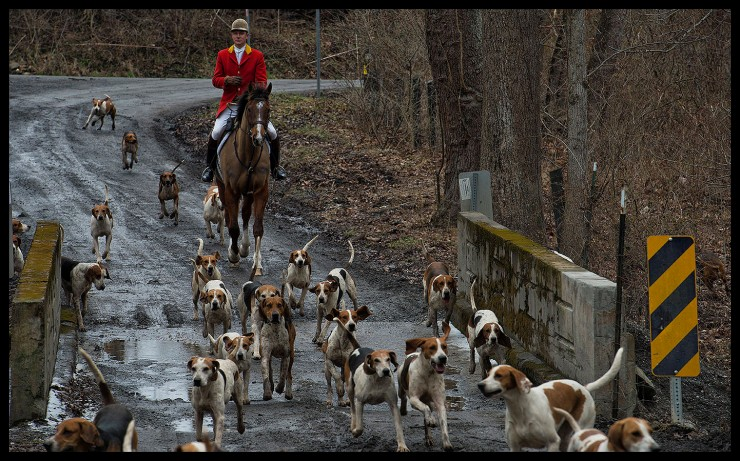 Piedmont Fox Hounds